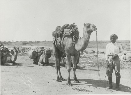 Bejah Dervish photographed with expedition leader LA Wells's camel