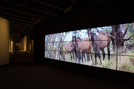The entrance to the exhibition, Spirited: Australia's Horse Story