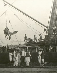 Camel being unloaded from ship photo