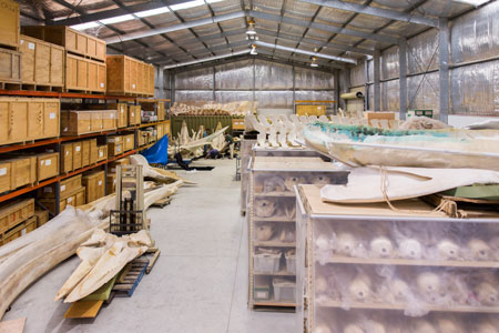 The collection shed at the Bolivar facility, which houses more than 1200 specimens of whales and dolphins