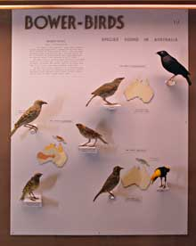 A case from the old bird gallery, dense with information