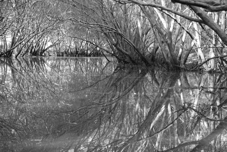Overhanging trees, Norman Creek, film still from the visual poem, Navigating Norman Creek