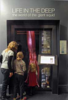The converted lift well with its giant squid and deep sea creatures