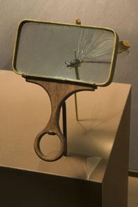 Darwin exhibition magnifying glass