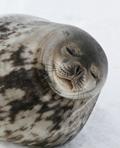 antartica-thumb_120w