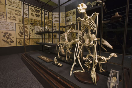 Darwin exhibition skeleton case