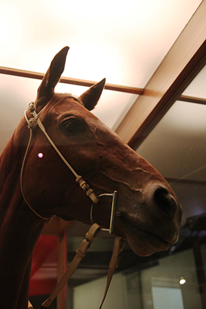 The exceptionally lifelike mount, depicting Phar Lap with ears pricked and eyes alert