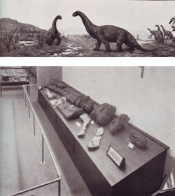 Fig. 11. (below) Dinosaur display in the Queensland Museum, 1929 and (top) painting by Douglas S Annand
