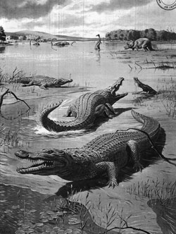 Fig. 12. The Scourge of the Dinosaurs: A Giant Crocodile of 80,000,000 Years ago
