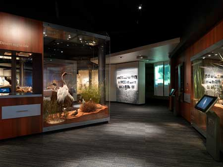 A view in the Biodiversity Gallery, desert nightlife and waterhole