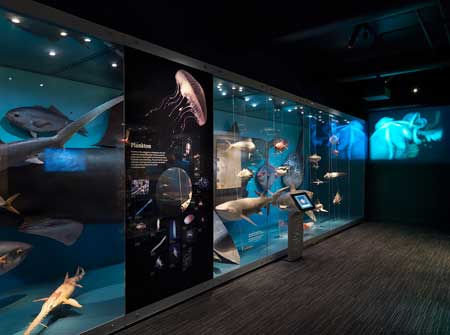 The marine case, with the basking shark in context