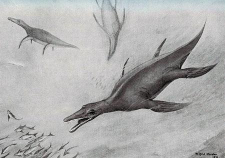 Fig. 15. 'Restoration of Kronosaurus queenslandicus'